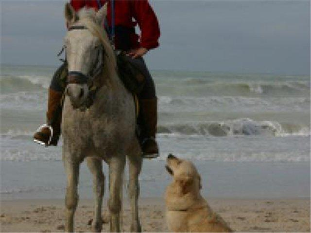 Golden e Cavalli 001